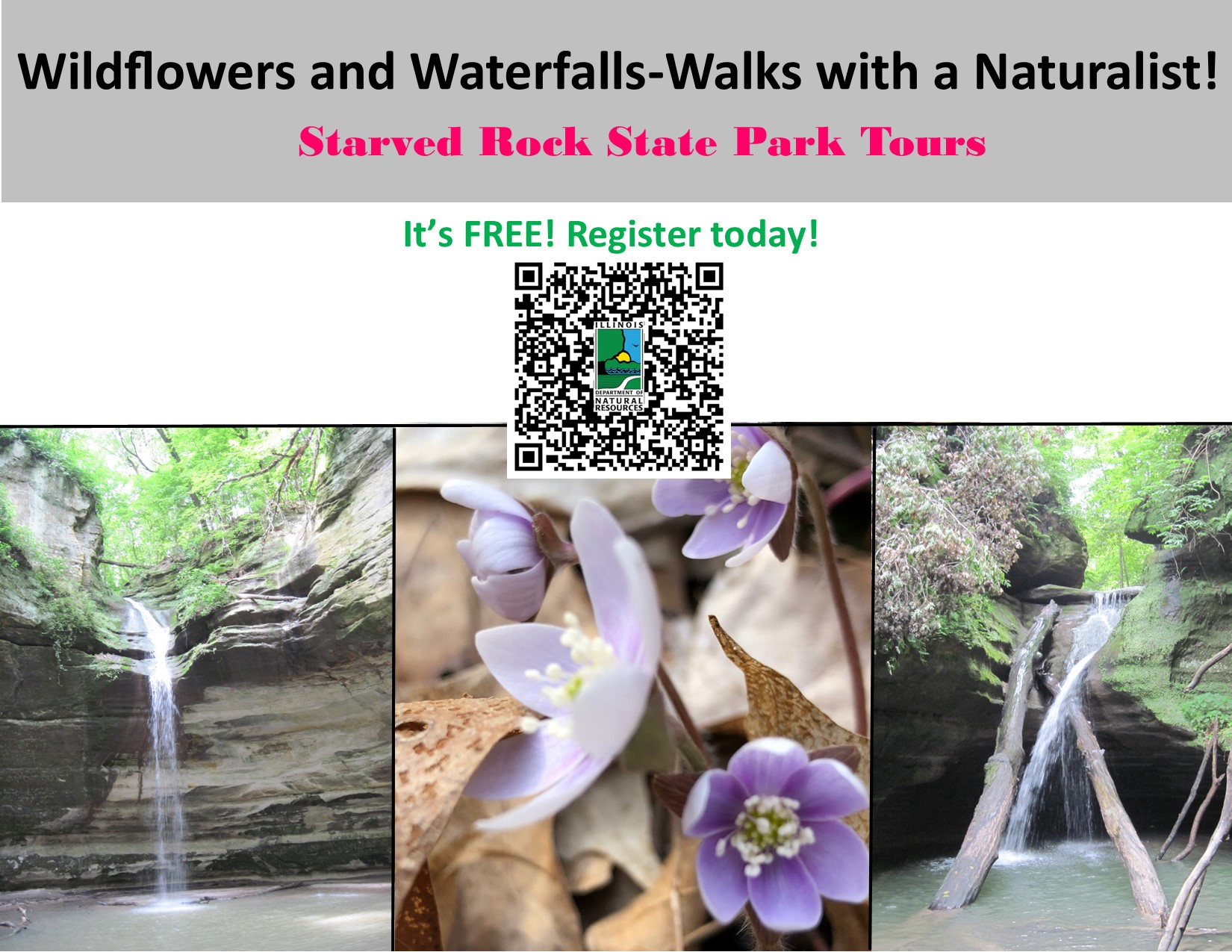 Wildflowers and Waterfalls.jpg