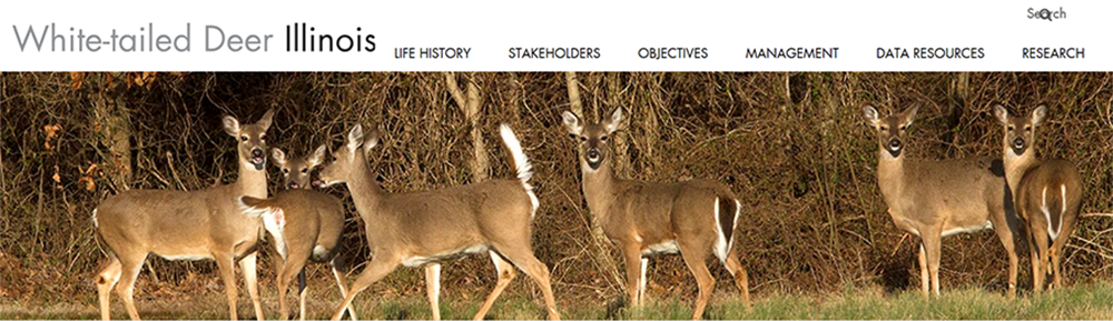 Illinois Whitetail Deer Website