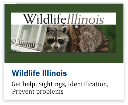Wildlife in illinois