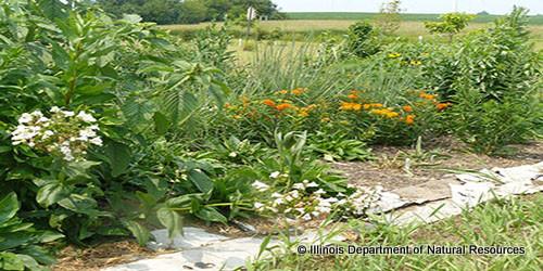Schoolyard habitat action grants