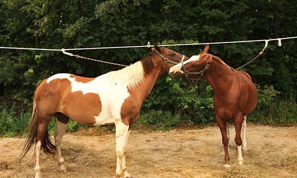 Equestrian Campground