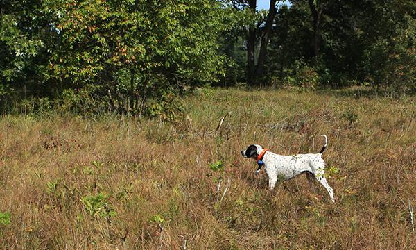 Upland Game Hunting