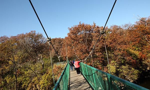Suspension Bridge over Rock Creek
