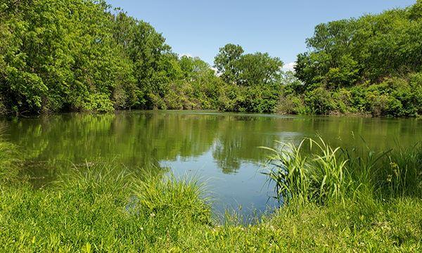 Ledge Pond Mautino