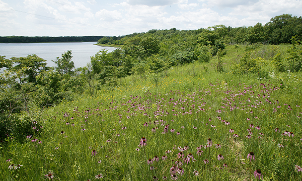 Lake Shelbyville