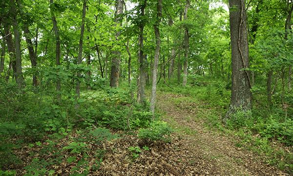 Raccoon Trail