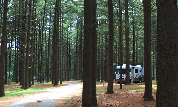 Pine Ridge Campground