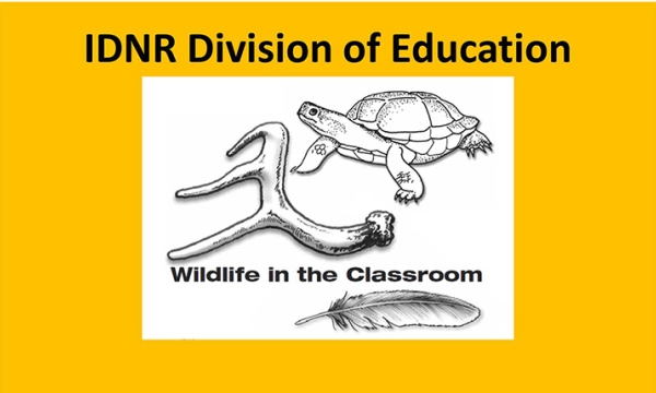 Wildlife in the Classroom