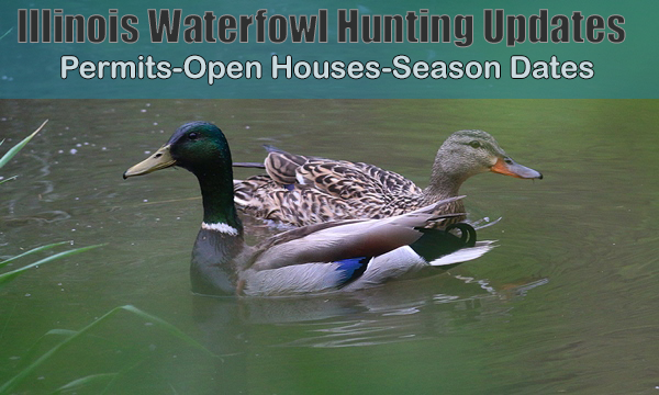 Illlinois Waterfowl Updates