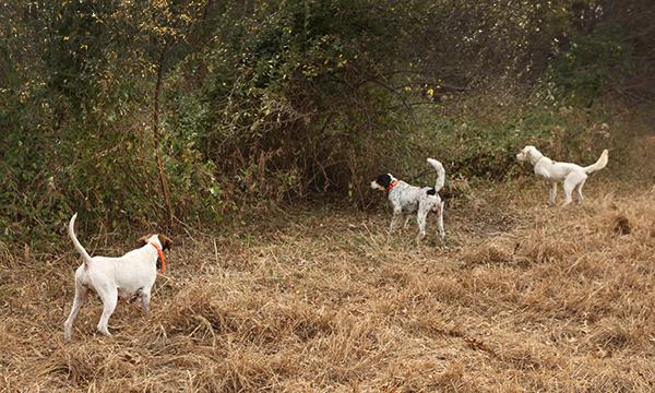 Upland Game Hunt