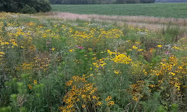 Prairie Planting - Beautiful Vista