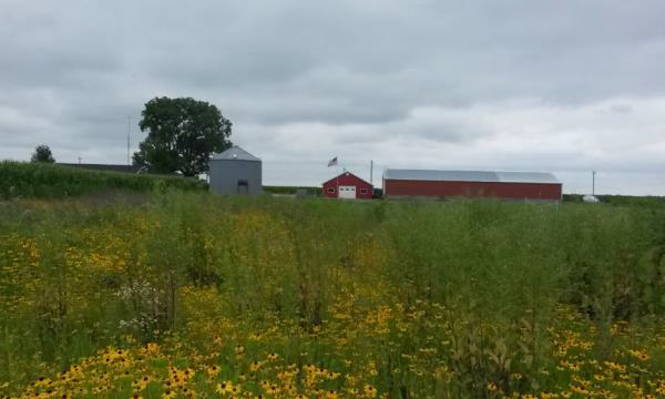 Prairie Planting Farmstead-Reduce Taxes by Mowing less