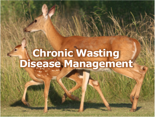 Chronic wasting disease 2.png