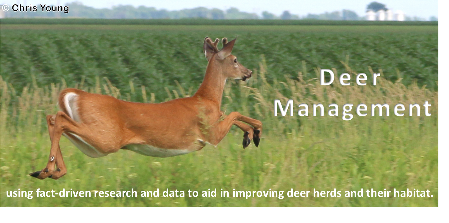 Deer Management image 2.png