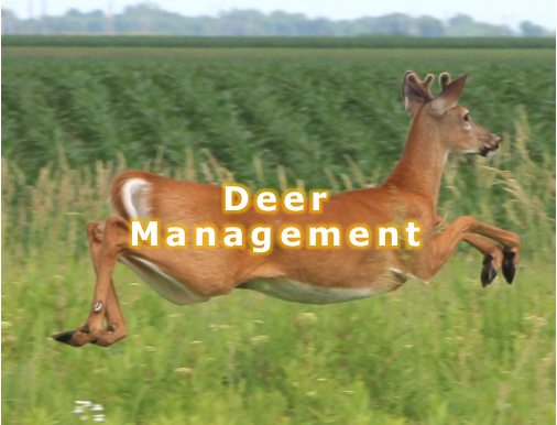 Deer management 5.png