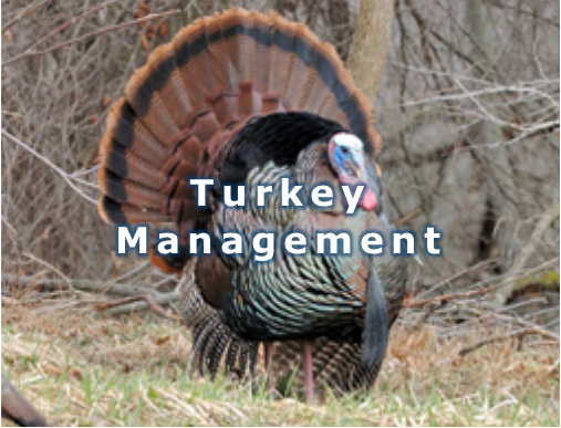 Turkey management 5.png