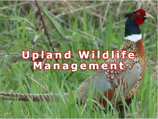 Upland Wildlife 4.png