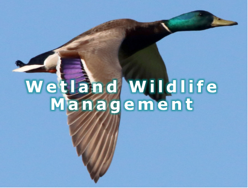 Wetland Wildlife 7.png