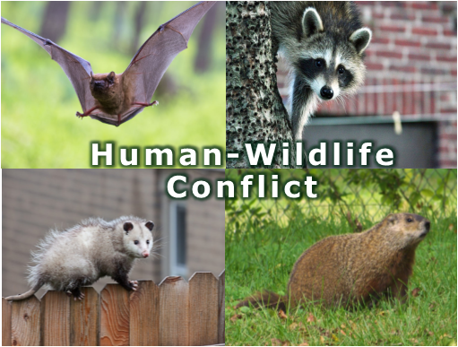 humanwildlife conflict 3.png