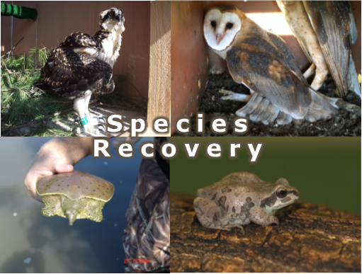 species recovery image 4.png