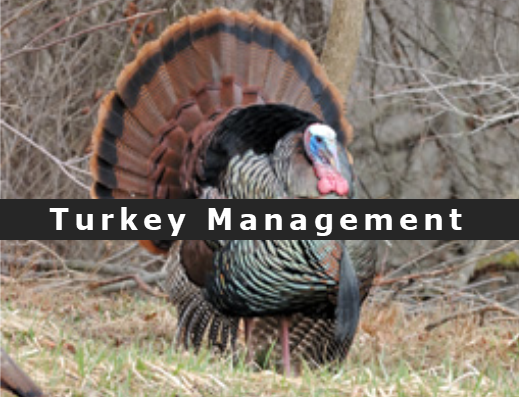 turkey management 2.png