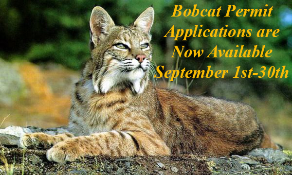 Please Click Here for Bobcat Permit Instructions