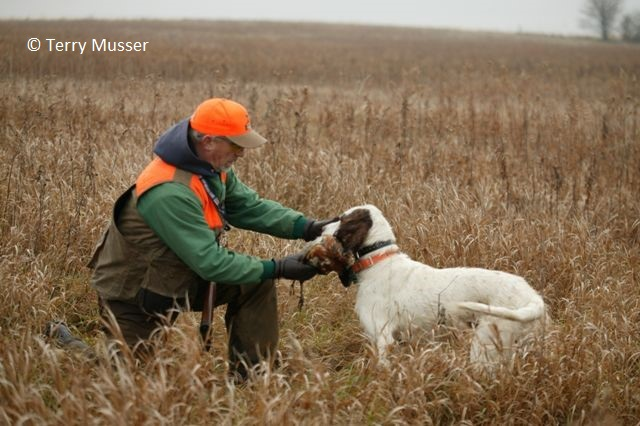 https://www2.illinois.gov/dnr/hunting/uplandgame/PublishingImages/Dog_training.jpg