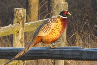 Upland game for Illinois dnr fishing license