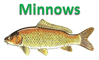 June2016Minnows.PNG
