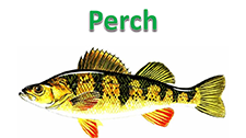 June2016Perch.PNG