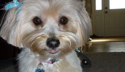 June is Pet Preparedness Month