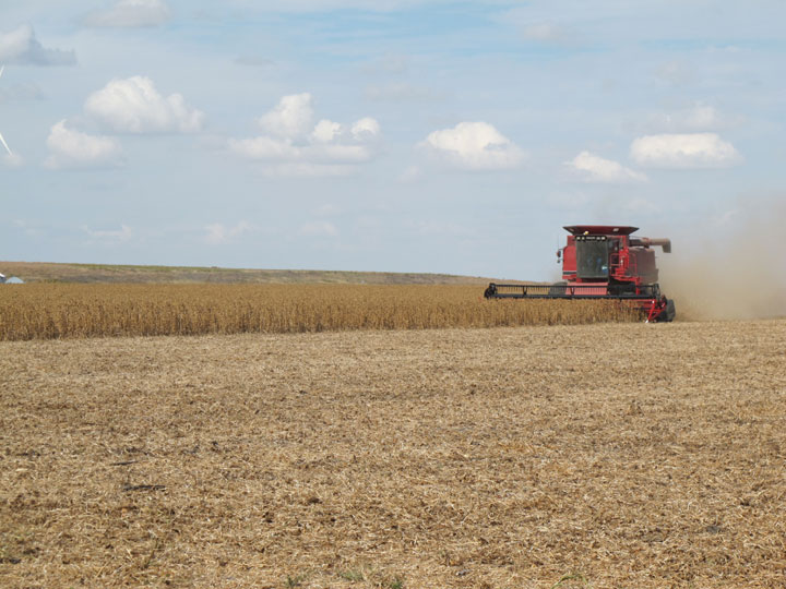 Grain Tour Picture Combining Soybeans.