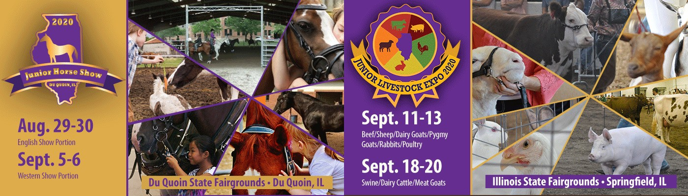 The Junior Livestock Expo will take place in Springfield over the course of two weekends in September. Beef, sheep, dairy goats, pygmy goats and rabbits will all show September 11th-13th. Swine, dairy cattle and meat goats will have their turn in the show