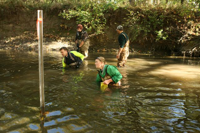Biologists sampling a stream for mussels.