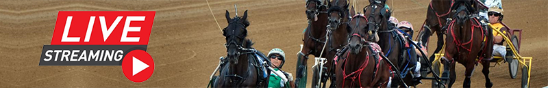 watch live stream of the harness races